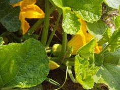 The Tasteful gardener - a great resource for all types of home gardens