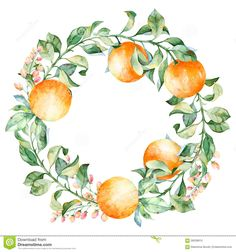 Vector Round Frame Of Watercolor Orange And Flowers. Watercolor Illustration Wreath Of Mandarin And Leaves - Download From Over 46 Million High Quality Stock Photos, Images, Vectors. Sign up for FREE today. Image: 58338910