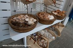 Love me some shells! Display at Perspicasity, Seaside Florida.