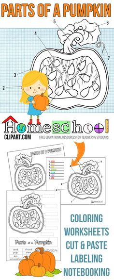 Free Parts of a Pumpkin Worksheets & Activity Pages