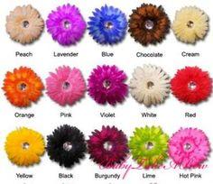 Gerber daisies: Love them all favorite flower!!!