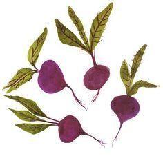 "88 Likes, 4 Comments - Katie Wilson (@inmybackyardnz) on Instagram: ""Beetroot #illustration #food #vegetable"""