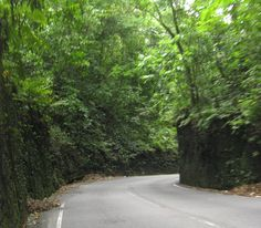 fern gully jamaica... loved driving through here!! :)