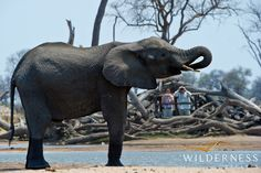 Davison's Camp - All the action unfolds at the waterhole  #Africa #Safari #Zimbabwe