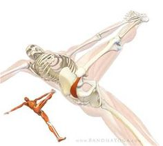 piformis stretch- - Yahoo Image Search Results