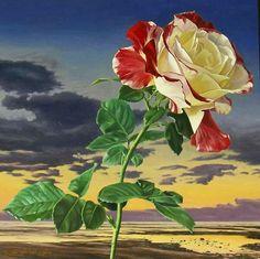 E viva a rosa. . .