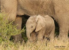 Protect #Elephants From Poaching: Ban the Sale of Ivory!  >>>http://tak.pt/i/zcBwnMdH  >>>http://petitions.moveon.org/environmental-action/sign/save-the-elephants-ban …