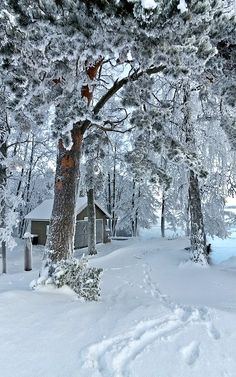 A Snowy Winter Path.. Helsinki, Finland