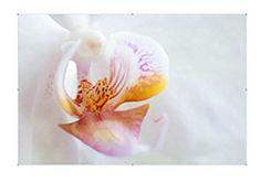 Orchidee Blumensamen Bunt ca 100 stk Dreamlife…