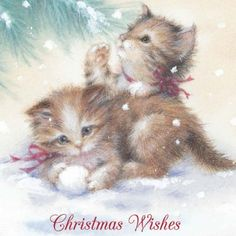"""""""Christmas Wishes"""" kittens"""
