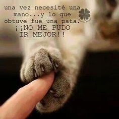 Love Pet, I Love Cats, Cute Cats, Funny Animal Memes, Funny Animals, Cute Animals, Spanish Inspirational Quotes, Spanish Quotes, Dog Quotes