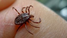 natural tick prevention and treatment