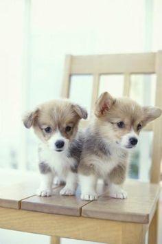 So cute!!!!!!!!!!!!!