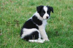 Puppy envy!!