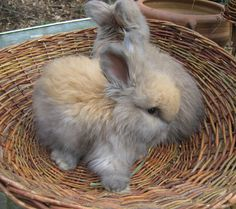 how to tell baby rabbits apart