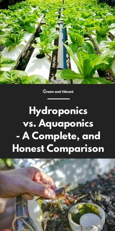 Aquaponics - A Complete, and Honest Comparison Hydroponics vs. Aquaponics - A Complete, and Honest ComparisonHydroponics vs. Aquaponics - A Complete, and Honest Comparison Hydroponic Farming, Hydroponic Growing, Aquaponics System, Growing Plants, Diy Hydroponics, Aquaponics Greenhouse, Permaculture, Aquaponics Plants, Cool Things To Make