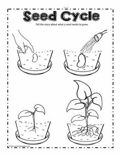 Planting Worksheets for Kids Plant Seed Cycle Worksheets Printable Preschool Worksheets, Science Worksheets, Kindergarten Worksheets, Worksheets For Kids, Free Printable, Parts Of A Seed, Parts Of A Plant, Seeds Preschool, Preschool Activities