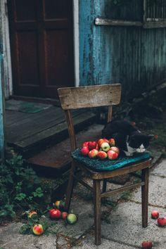 Autumn garden, apples and cat!
