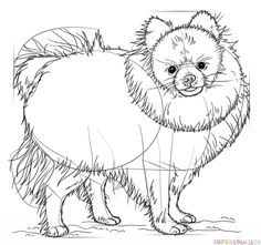 How to draw a pomeranian dog step by step. Drawing tutorials for kids and beginners.