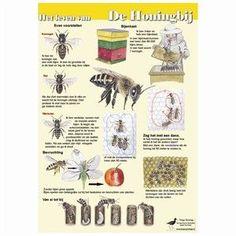 poster - Het leven van de honingbij (Jasper de Ruiter)