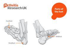 Parts of the feet Yoga For Arthritis, Peace, World