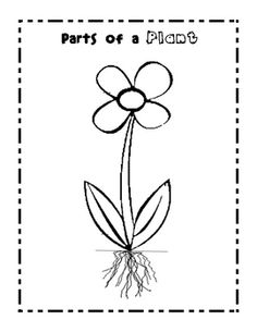 Computer Activity for learning parts and functions of plants ...