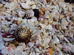 Shells #portfairypics #portfairy #swim #beach #ocean #shell #shells #camera #capture #photo #photograph #photography #nature #greatoceanroad #great_captures_nature #create #share #like #follow #ig_myshots #igmasters #ig_great_shots #broken #color #colours #australia by 6seasons http://ift.tt/1UokfWI