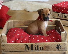 Dog bed   Etsy
