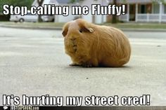 Stop calling me Fluffy! It's hurting my street cred!