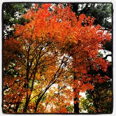 Fall in Charlottesville VA Charlottesville Va, Virginia Is For Lovers, Falling In Love, Exploring, Autumn, Halloween, Places, Nature, Naturaleza