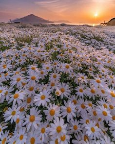 Gardens Discover Nature Photography World Travel Spring Aesthetic Nature Aesthetic Flower Aesthetic Beautiful Nature Wallpaper Beautiful Landscapes Beautiful Flowers Beautiful Gorgeous Flower Phone Wallpaper Iphone Background Wallpaper Aesthetic Pastel Wallpaper, Aesthetic Backgrounds, Aesthetic Wallpapers, Nature Aesthetic, Flower Aesthetic, Spring Aesthetic, Beautiful Nature Wallpaper, Beautiful Landscapes, Sunflower Wallpaper