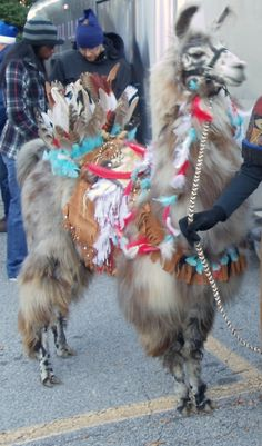 Llama Quinn Indian Costume-I'm glad that this is happening somewhere on earth. Funny Llama, Cute Llama, Funny Animal Pictures, Funny Animals, Cute Animals, Alpacas, Llama Images, Llama Costume, Llama Llama Red Pajama