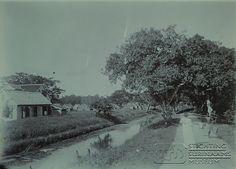 Plantagewoningen achter een kanaal waar een weg voorlangs loopt. Op de weg een vrouw met parasol en een man met juk waaraan twee vierkante vaten hangen. Datum: ca. 1903 Locatie: Commewijne, Suriname Vervaardiger: Inv. Nr.: 73A-134 Fotoarchief Stichting Surinaams Museum