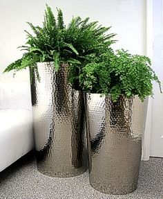 Ferns in hammered stainless steel planters like the planters but not the ferns