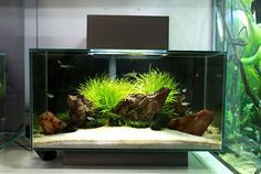 Fluval Edge Shop Displays | AquaScaping World Forum    Http://www.aquascapingworld