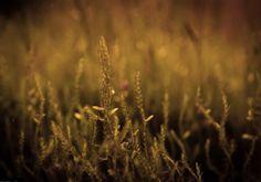 Alga tájékoztató, alga elleni védekezés Green Aqua Dandelion, Flowers, Plants, Seaweed, Dandelions, Plant, Taraxacum Officinale, Royal Icing Flowers, Flower