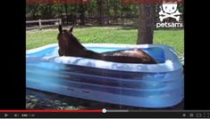 Kiddie pools aren't just for kids anymore. This horse looks like he's having a great time :)