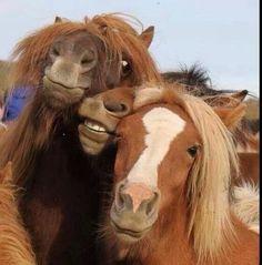 Mongolian horses!