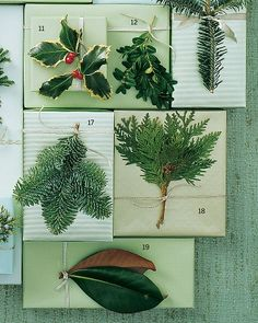 11. English Holly  12. Boxwood  17. Noble Fir  18. White Cedar  19. Magnolia