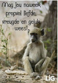 Goeie More, Afrikaans, Good Morning, Humor, Words, Day, Buen Dia, Bonjour, Humour