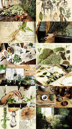 Hogwarts subjects Herbology: Herbology is the study of magical and mundane plants and fungi, making it the wizarding equivalent to botany. Herbology is a core class and subject taught at Hogwarts School of Witchcraft and Wizardry, in which students lear Witch Aesthetic, Aesthetic Collage, Ravenclaw, Hogwarts, Jolie Photo, Kraut, Witchcraft, Aesthetic Wallpapers, Herbalism