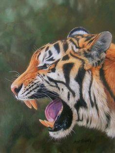David Stribbling, Hiperrealismo Animales Pintura al Óleo. Tigre Rugiendo