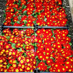 Sezonun En Güzel Renkleri Vegetables, Food, Essen, Vegetable Recipes, Meals, Yemek, Veggies, Eten