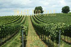 for sale wine fields