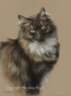 Norwegian forest cat in pastel by Marjolein Kruijt