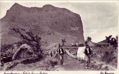 Transporte em rede. Caminho para o Porto da Cruz, Madeira. Ao fundo a Penha de Águia. Início do séc. XX.