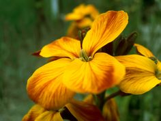 Orange flower by Rosca Liviu on 500px