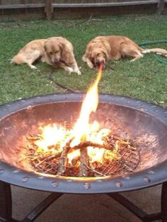 Dogs  cooking with gas