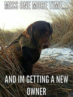 All who hunt have gotten this look before from our partner lol Labrador Retriever Funny Dogs, Funny Animals, Cute Animals, Animal Funnies, I Love Dogs, Cute Dogs, Awesome Dogs, Hunting Jokes, Deer Hunting Humor