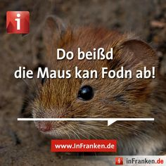Daou beißd de Maus koan Foon oh. Sounds Like, Abs, Humor, Funny, Prints, Funny Sayings, Funny Pics, German Language, Cool Pictures